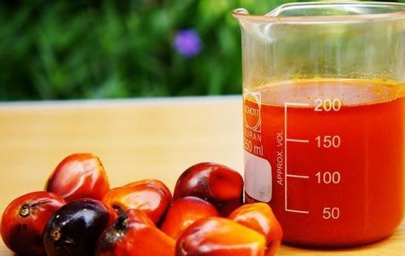 Palmino ulje je dobro za kuvanje, kožu, kosu i opšte zdravlje