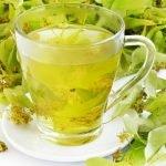 Čaj od lipe priprema i lekovita svojstva
