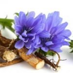 Biljka cikorija kao lek – čaj, salata, kafa