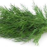 Mirođija kao začin i lek – recepti za jela, sos od mirođije i čaj