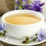 Čaj od cikorije (vodopije) pripema za mršavljenje, probavu i druge zdravstvene probleme