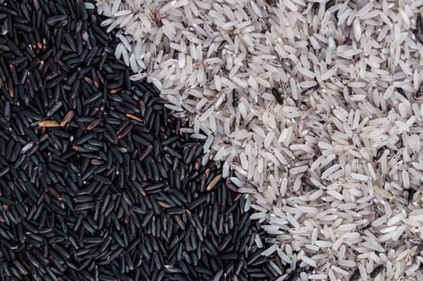 crni-pirinac