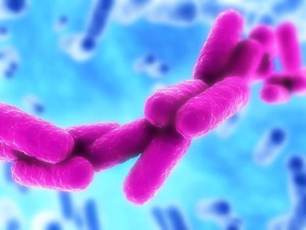 klebsiella-bakterija