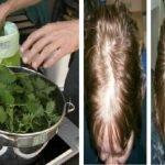 kopriva za kosu upotreba