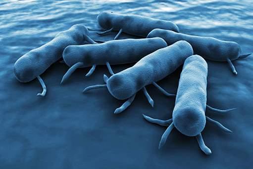 salmonela bakterija