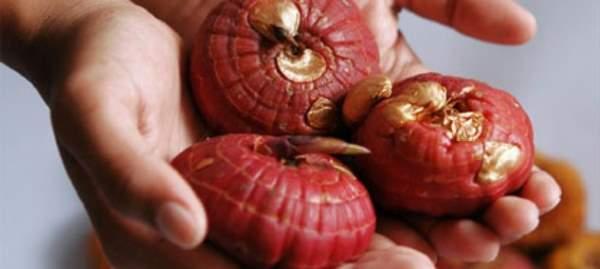 gladiole sadnja lukovice